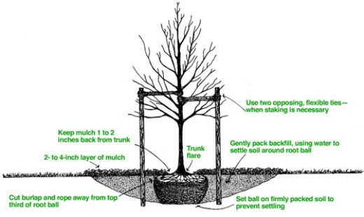 38-Tips For Planting Different Types of Trees